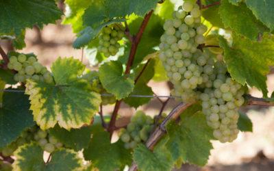 Millésime 2014 en vins de Bourgogne
