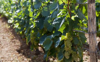 Vins de Bourgogne : le millésime 2013