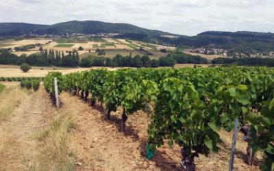 Sécheresse 2015 en Bourgogne