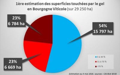 Vignes gelées en Bourgogne : 1er Bilan