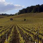 Photos vin et vigne