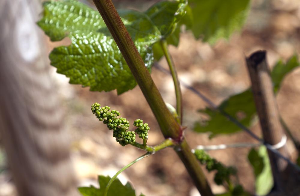 Millésime 2013 en Bourgogne