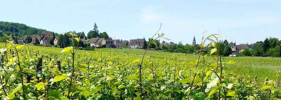 Vin Bourgogne 2013