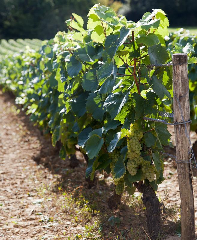 vin_bourgogne_2013
