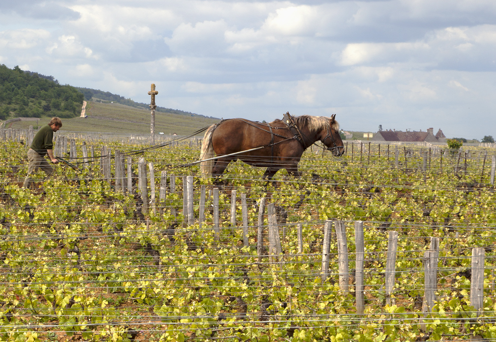 labourage vigne romanée conti