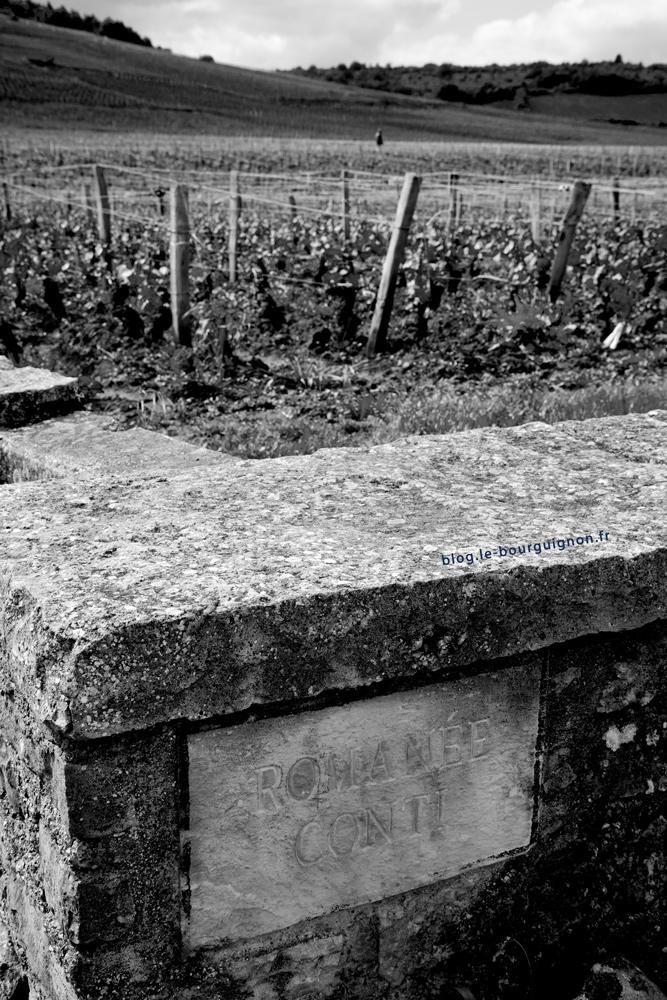phot de la vigne de romanée conti