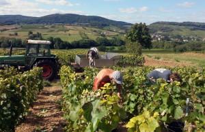 Mercurey, capitale viticole de la Côte Chalonnaise