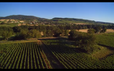 Vidéo vue aérienne vignes en Bourgogne