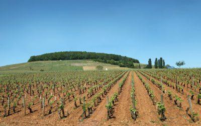 Millésime 2019 en Bourgogne