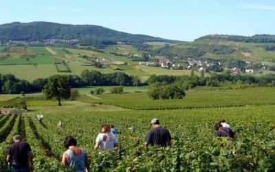 Appellations : le projet qui a fait frémir la Bourgogne viticole