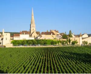 Meursault : grand vin blanc de Bourgogne