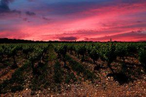 Pommard, Vin de la Côte de Beaune