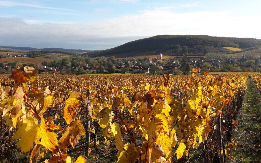 Que font les viticulteurs en automne?
