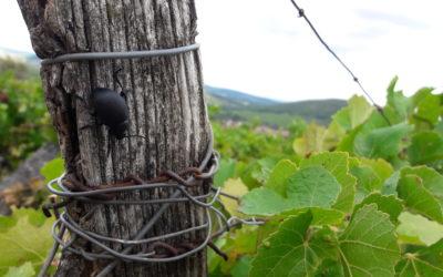Bio, HVE, biodynamie, vin nature : tout comprendre aux labels