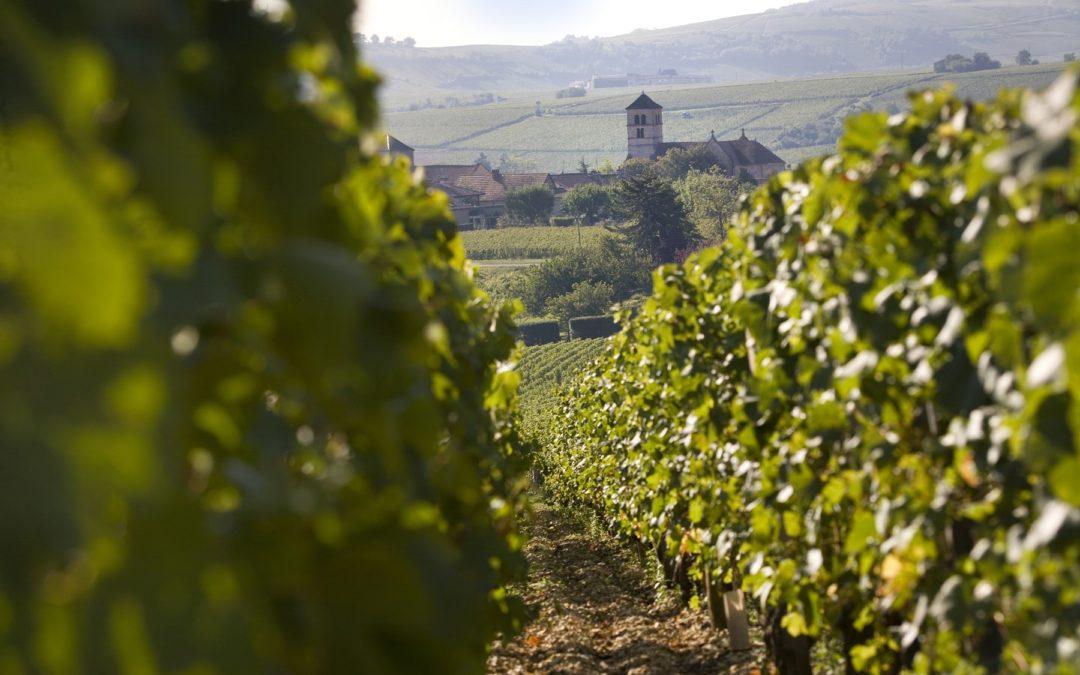 Saint-Véran, un grand vin blanc qui fête ses 50 ans