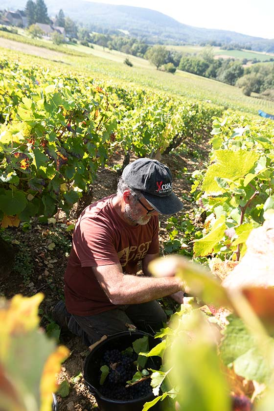 Vendangeur Bourgogne